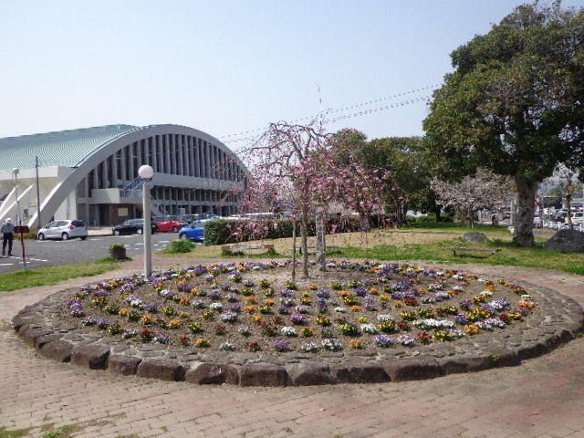 """下松市 市民体育館前の""""桜とパンジー""""のコラボ"""